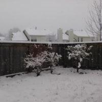とうとう冬本番