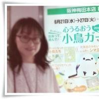 参加してきました!!大阪阪神梅田「心うるおう小鳥ガーデン2017」 & おいしい御曹司551