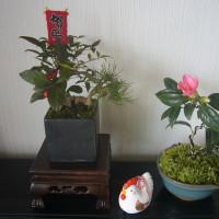 あけましておめでとうございます。椿と南天盆栽