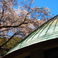 『大磯の桜』 郷土資料館