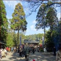 不思議なパワースポットの森<南九州感動の旅(9)>