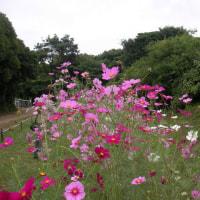 2010-10-24花の美術館01
