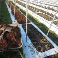 リンドウの畑に堆肥マルチをしました