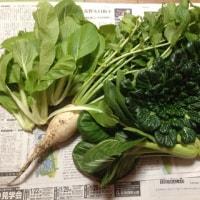 ばぁばの畑野菜💕