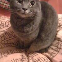 2月22日は「にゃんにゃんにゃんの日(猫の日)」です!動物愛護は大切な基本的「動権」の尊重!だぜ!