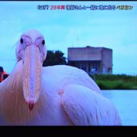 6/25 シムラ動 大野君とガー   可愛い顔したガー