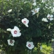 最近のお花の写真(7/22,21)