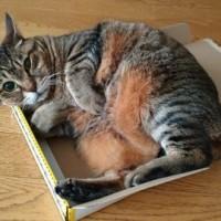 とことん、箱が好き!