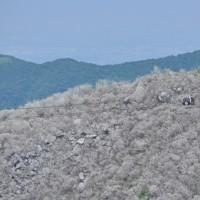 ◆大涌谷の黒玉子