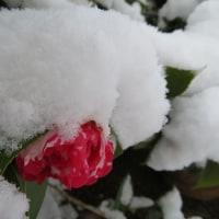 今年度の初めての積雪