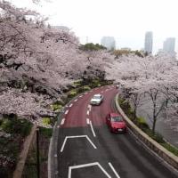 東京ミッドタウンの桜 2017