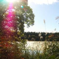 光につつまれる秋の水辺。