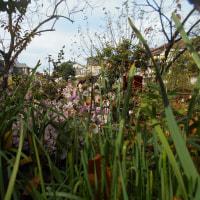 実家の蜜柑と柿の木