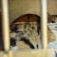 命の期限が迫っています!熊本被災猫9匹を助けてください!