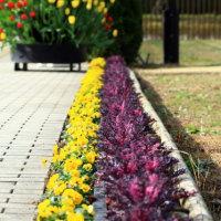 平塚 花菜ガーデン