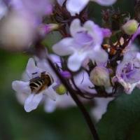 昭和記念公園に咲き誇る花花