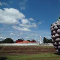 ブラジルで一番大きなブドウ