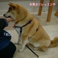 2月22日(水)…『犬の生活論』出席のため≪お休み≫です。