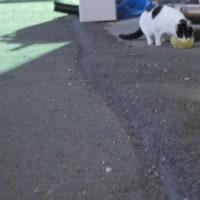 2月のTNR予定新入り猫2匹、寒い公園猫の様子〜