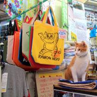 梅雨真っ最中の沖縄の猫たち 2016年5月 その2