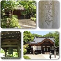 新緑の深大寺