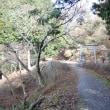 まち歩き左0565 京都一周トレイル 東山コース  山中に石鳥居