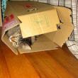 すみっこの箱。