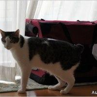 「愛猫の写真」「荷受代行詐欺に注意!」他