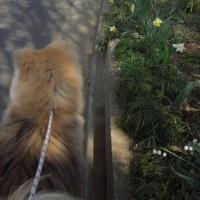 お花見散歩に行って来た♪