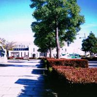 020邑楽郡板倉町海老瀬・頼母子薬師堂の庚申塔(最寄り:板倉東洋大前駅)
