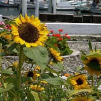 海辺で見た花