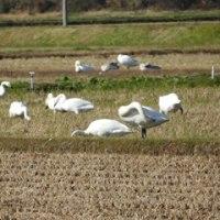 鳥インフルエンザの感染拡大が心配・・・新たに家禽感染も確認