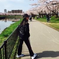 桜咲きましたね〜♪