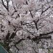 176日目 桜を愛でながら中山道を歩く・続編(4)~深谷