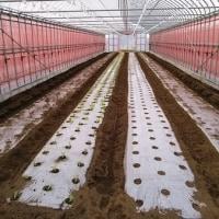 春大根播種とリーフレタスの定植