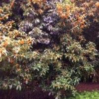 服部緑地公園『秋を探しに』