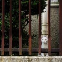 今日の一枚【today's shot】ネコちゃん(cats)