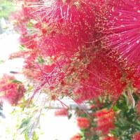 赤いブラシ イヤイヤ(ヾノ・ω・`)