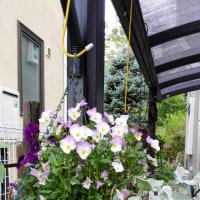 庭の花々3