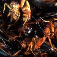 昆虫食の世界 チンリー