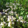 草原に咲く花々