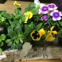 買ってきたお花たち