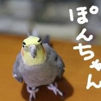 漱石忌(12月9日)