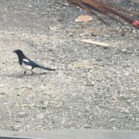 佐賀県の鳥