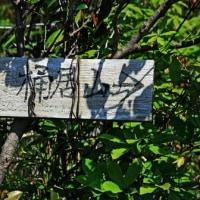 一年ぶりの桶居山へトレッキング