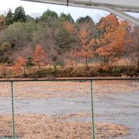小山池は、もうほとんど「冬景色」ですよ