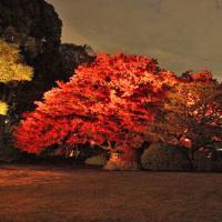 六義園の紅葉 ライトアップ