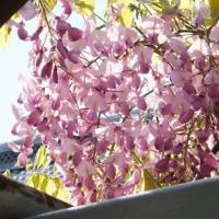 色々の花が咲きそろいました。