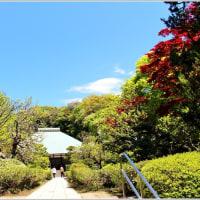 新緑の美しい浄妙寺へ、、、