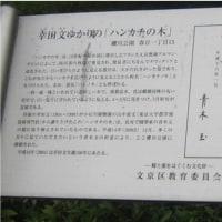 ハンカチの木 知ってる?        江戸っ子幸田文のゆかりの木